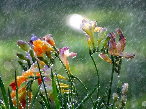 sujangarh rain