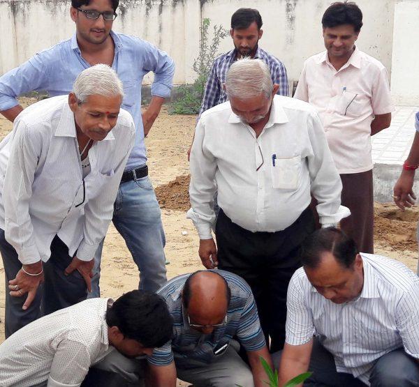 Planting greenery Sujangarh